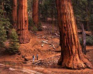 big big trees and little people