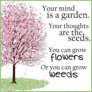 your mind is a garden grow flowers or weeds