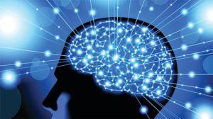 blue brain neuroplasticity
