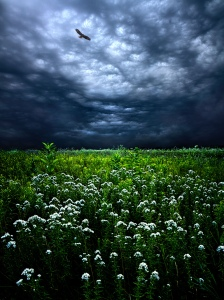 horizon blue sky eagle and flowers