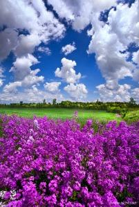 phil koch purple flower horizon