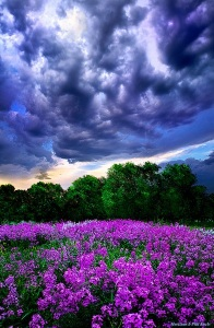 horizon blue clouds purple flowers