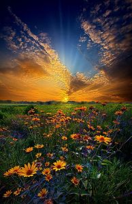 horizon orange flowers orange sky