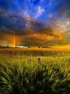 horizon rainbow field