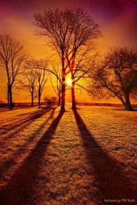 horizons trees and shadows