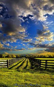 horizon fences