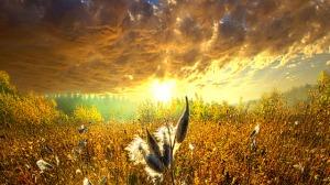 horizon golden sunrise