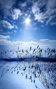 horizons blue reeds