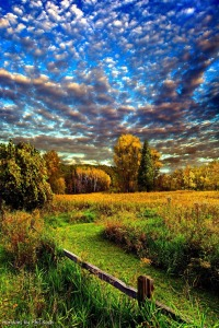 horizons blue sky orange trees