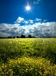 horizons sun in sky field of lfowers