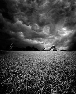 horizon black and white