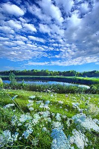 horizon clouds flowers pond