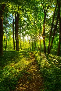 horizons green forest trees and sun