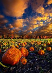 horizons pumpkin