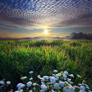 horizons sun and flowers