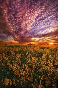 horizons pink sky