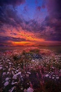 horizons purple red sky
