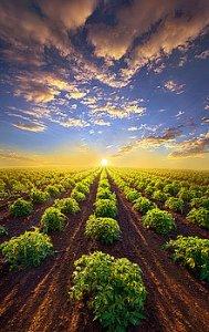 horizons row of trees into sun