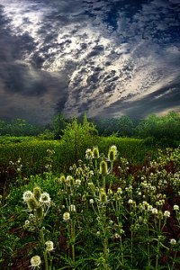 horizon calling-home-phil-koch
