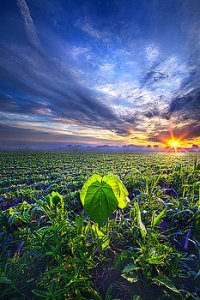 horizons a-single-thought-phil-koch