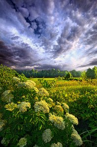 horizons morning-creation-phil-koch