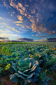 horizons the-bounty-phil-koch