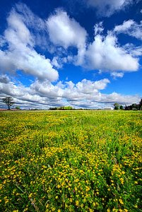 horizons a-bright-bright-sunshiny-day-phil-koch