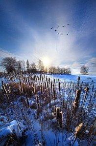 horizons wintertails-phil-koch