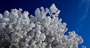 HORIZONS frost-bitten-phil-koch