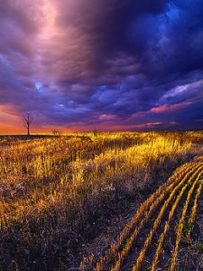 horizons rows-phil-koch