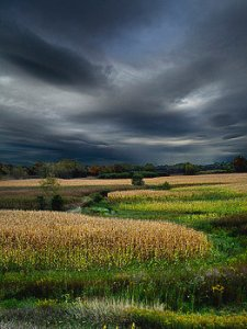 horizon distant-meadow-phil-koch