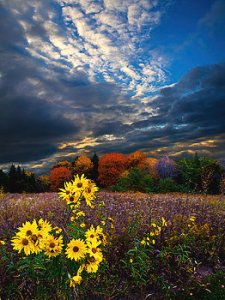 horizon parkside-phil-koch