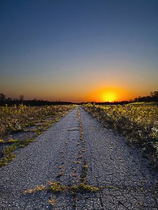Horizon weed-road-phil-koch