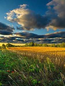 horizons amber-waves-phil-koch