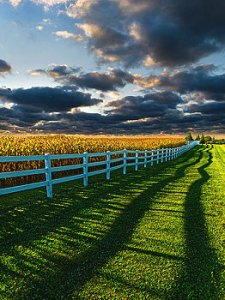 Horizons fensed-in-sunrise-phil-koch