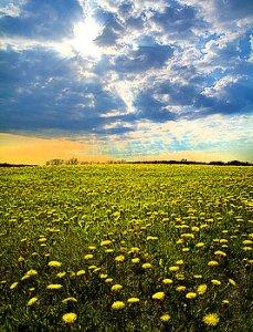 horizons field-of-dreams-phil-koch