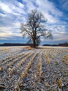 horizons 1-waiting-for-spring-phil-koch