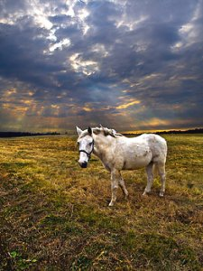horizons one-horse-phil-koch