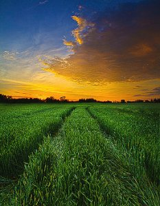 horizons roads-home-phil-koch