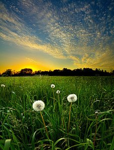Horizon ready-to-seed-phil-koch