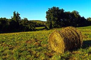 Horizons harvest-phil-koch