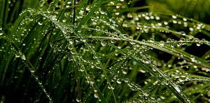Horizons rain-drops-phil-koch