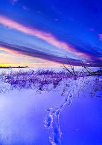 Horizon frozen-tracks-phil-koch