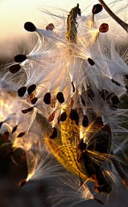 Horizons 2-seeds-phil-koch