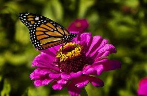 Horizons monarch-phil-koch