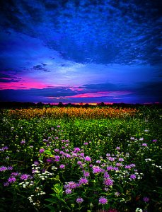 horizons purples-phil-koch