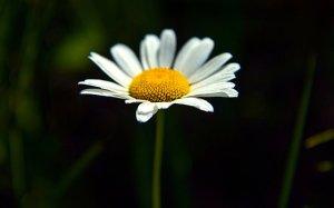 horizons-daisy-phil-koch