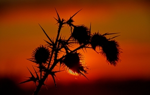horizons-thorns-phil-koch