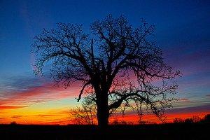 horizon-the-risen-tree-phil-koch