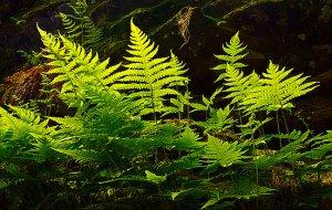 horizons-fern-light-phil-koch